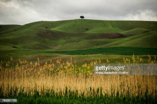 scenic view of field against sky - basilashvili stock photos and pictures