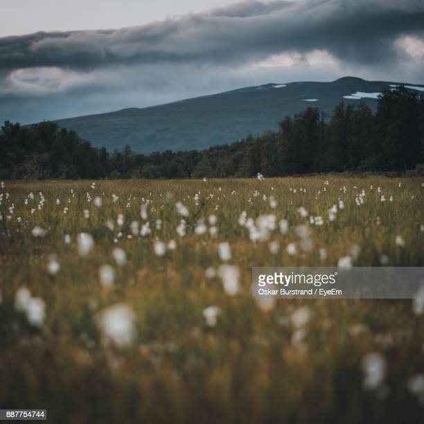 scenic view of field against sky - oskar stock pictures, royalty-free photos & images