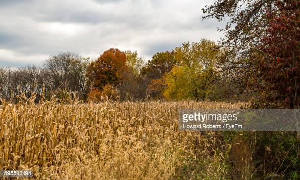 scenic view of field against sky - montgomery county pennsylvania stock pictures, royalty-free photos & images