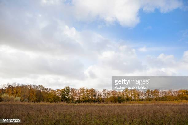 scenic view of field against sky - paulien tabak foto e immagini stock