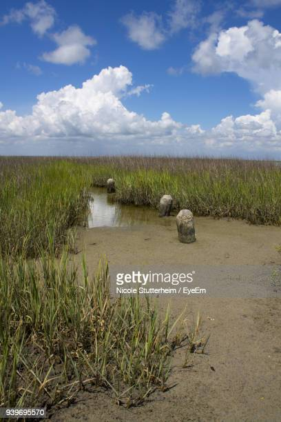 scenic view of field against sky - stutterheim stock photos and pictures