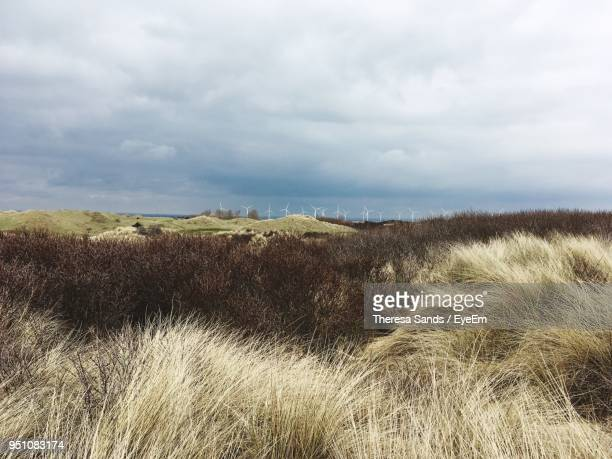 scenic view of field against sky - camber sands stock photos and pictures