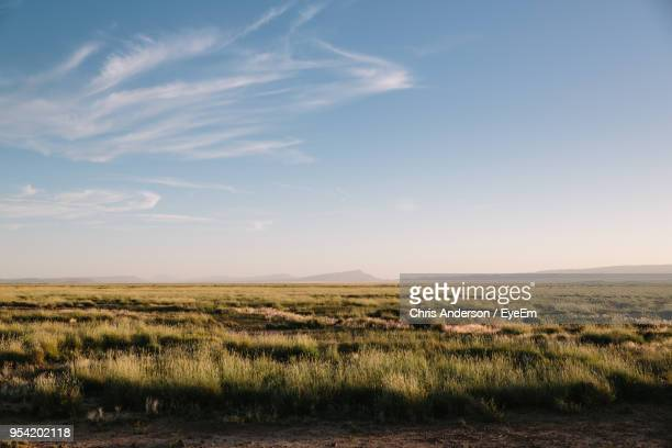 scenic view of field against sky - texas stock pictures, royalty-free photos & images