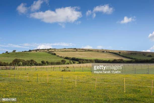 scenic view of field against sky - paddock stock photos and pictures