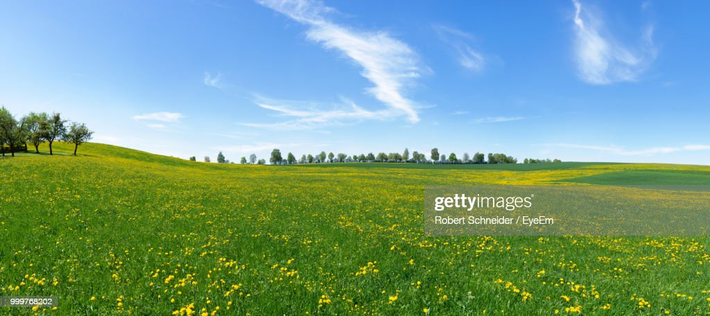Scenic View Of Field Against Sky : Foto de stock