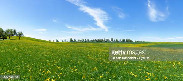 scenic view of field against sky - wiese stock-fotos und bilder