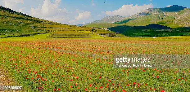 scenic view of field against sky poppies in castelluccio di norcia - castelluccio di norcia foto e immagini stock