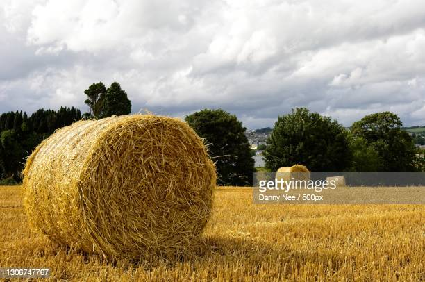 scenic view of field against sky,ireland - crop stock pictures, royalty-free photos & images