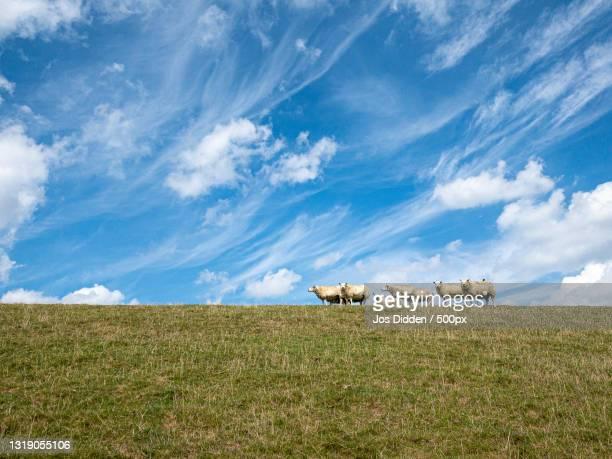 scenic view of field against sky,noorderdijk,usquert,netherlands - netherlands stock pictures, royalty-free photos & images