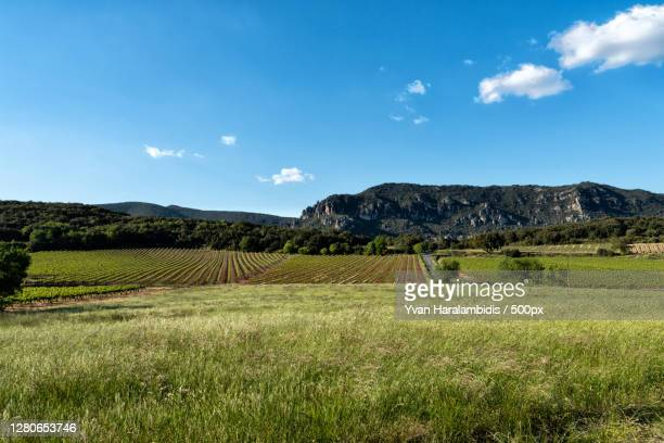 scenic view of field against sky,occitanie,france - nature stock pictures, royalty-free photos & images