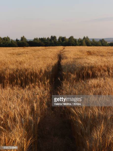 scenic view of field against sky,russia - nikitina stock pictures, royalty-free photos & images