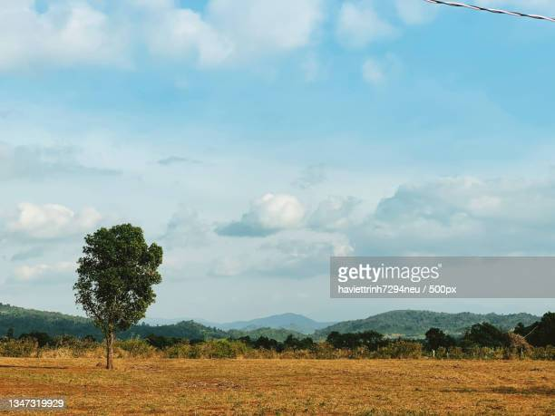 scenic view of field against sky,vietnam - neu stock pictures, royalty-free photos & images