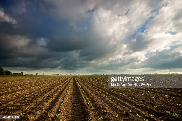 scenic view of field against storm clouds - 耕す ストックフォトと画像
