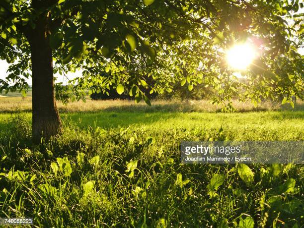 scenic view of field against trees - orchard stockfoto's en -beelden