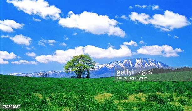 scenic view of field and mountains against blue sky - 岩手県 ストックフォトと画像
