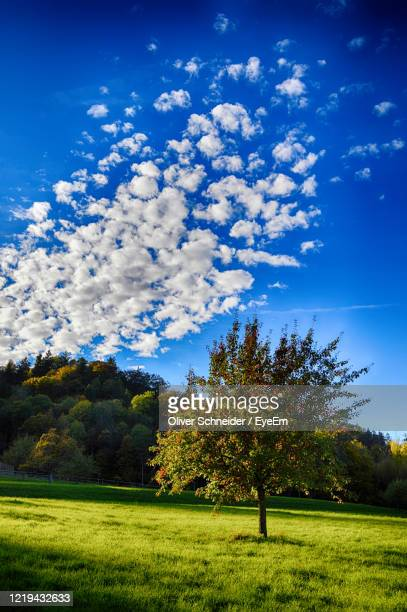 scenic view of field and trees against blue sky - apple tree stock pictures, royalty-free photos & images