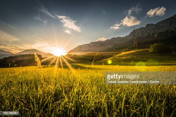 Scenic View Of Field At Sunset