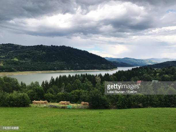 scenic view of field by lake against sky - lutai razvan stock pictures, royalty-free photos & images