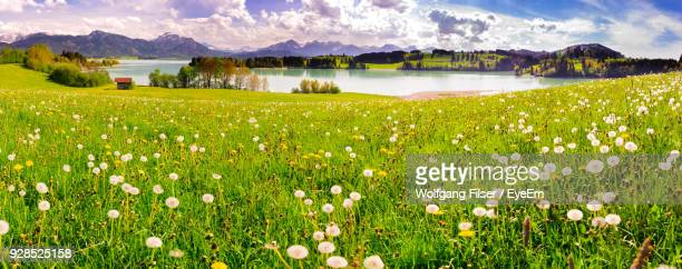 scenic view of field by lake against sky - bavaria stock photos and pictures