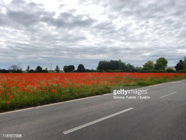 scenic view of field by road against cloudy sky - emilia romagna stock pictures, royalty-free photos & images