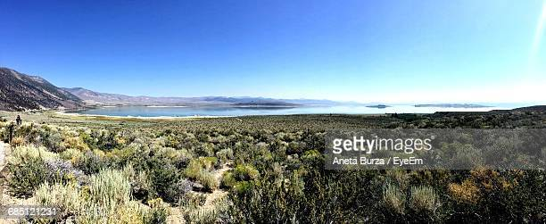 scenic view of field in front of mountains against clear blue sky - aneta eyeem stock pictures, royalty-free photos & images