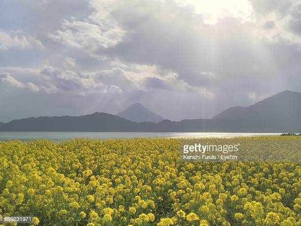 scenic view of field in front of mountains against sky - 鹿児島県 ストックフォトと画像
