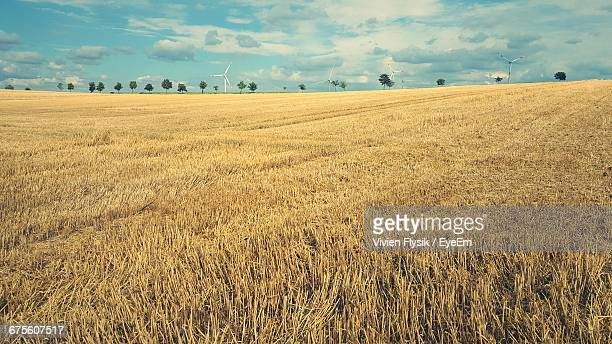 Scenic View Of Field Stubble Against Sky