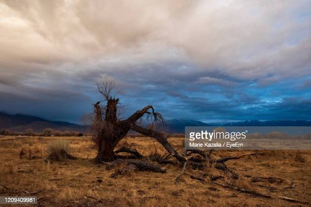 scenic view of field with large decaying tree under sunrise sky and mountain range against sky - semi arid stock pictures, royalty-free photos & images