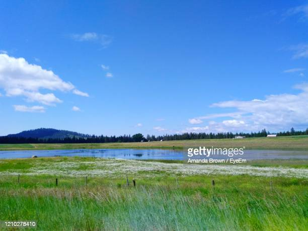 scenic view of field with water against sky - amanda marsh stock pictures, royalty-free photos & images