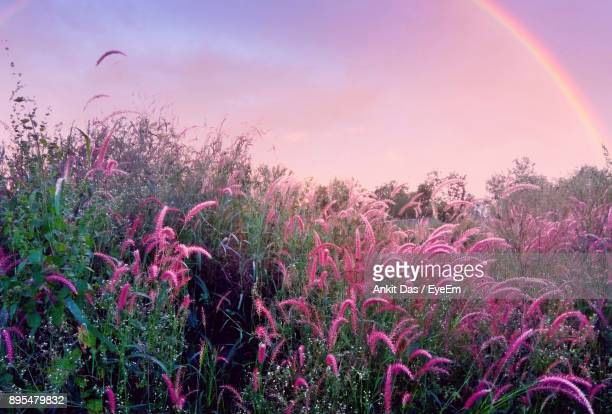 Scenic View Of Flower Field Against Sky