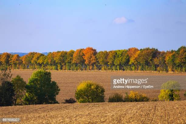 scenic view of flower trees against clear blue sky - letchworth garden city stock photos and pictures