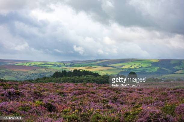 scenic view of flowering field against sky - exmoor national park stock pictures, royalty-free photos & images