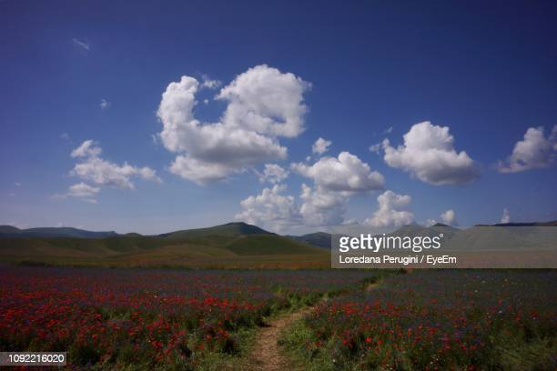 scenic view of flowering field against sky - loredana perugini stock pictures, royalty-free photos & images