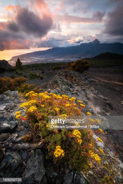 scenic view of flowering plants against sky during sunset,spanien,spain - spanien foto e immagini stock