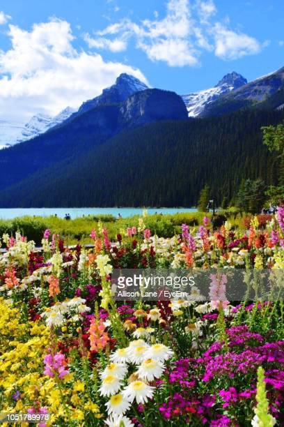 Scenic View Of Flowering Plants And Mountains Against Sky