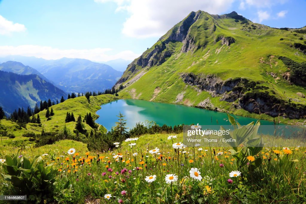 Scenic View Of Flowering Plants And Mountains Against Sky : Photo