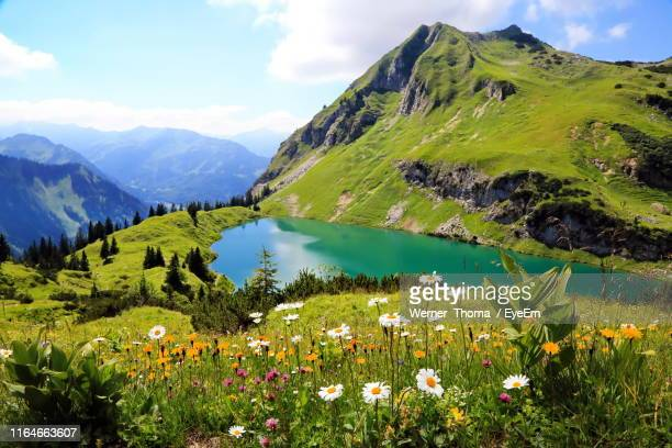 scenic view of flowering plants and mountains against sky - berg stock-fotos und bilder