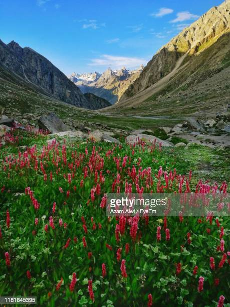 scenic view of flowering plants and mountains against sky - valley stock pictures, royalty-free photos & images