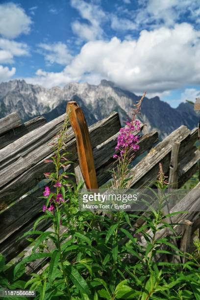 scenic view of flowering plants by mountains against sky - leogang stock pictures, royalty-free photos & images