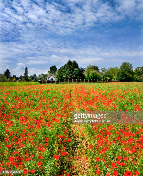 scenic view of flowering plants on field against sky - kent england stock pictures, royalty-free photos & images
