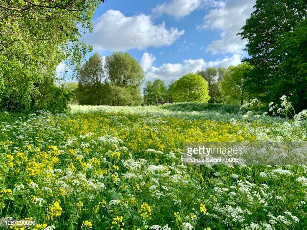 scenic view of flowering plants on field against sky,het schollebos,capelle aan den ijssel,netherlands - netherlands stock pictures, royalty-free photos & images