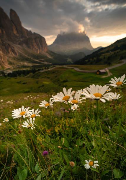 Scenic view of flowering plants on field against sky,Passo Gardena,Selva di Val Gardena,Bolzano,Italy