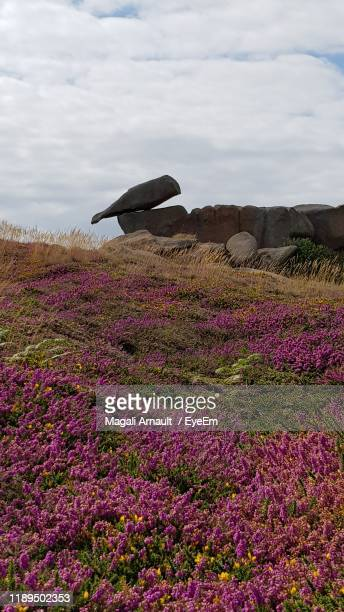 scenic view of flowering plants on land against sky - arnault stock pictures, royalty-free photos & images