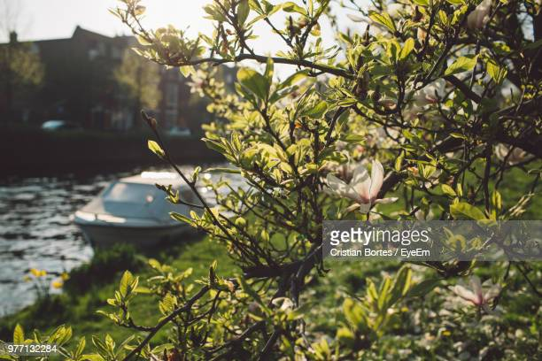 Scenic View Of Flowering Tree By Boat