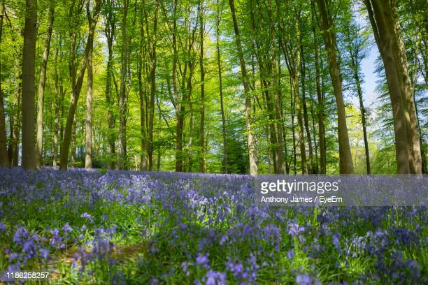 scenic view of flowering trees in forest - northamptonshire - fotografias e filmes do acervo