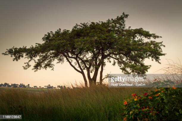 scenic view of flowering trees on field against sky - south africa stock pictures, royalty-free photos & images