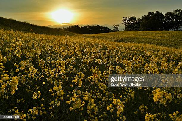 Scenic View Of Flowers Blooming In Field