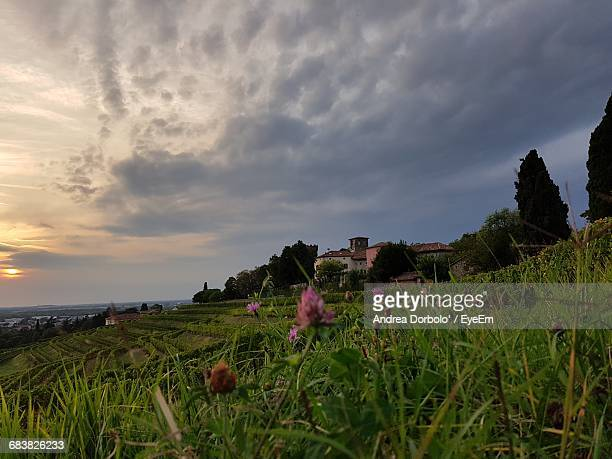 Scenic View Of Flowers Growing On Field Against Cloudy Sky