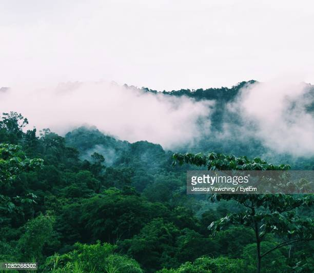scenic view of foggy mountain against sky - trinidad and tobago stock pictures, royalty-free photos & images