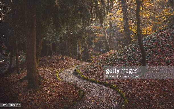 scenic view of foliage in monza park during autumn - monza stock pictures, royalty-free photos & images